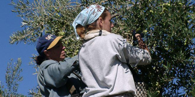 Avances Y Compromisos Para Con Las Mujeres Rurales